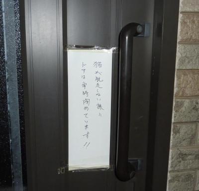 Harigami800